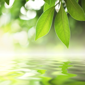 leaves water light